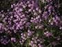 Flora riserva della Duchessa